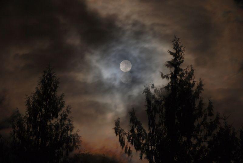 Full Moon 1/8/12